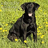 Labrador Retrievers 2017 Calendar: Includes Downloadable Wallpaper