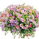 Steellwingsf 100 Pz Morning Glory Seeds Pianta Home Office Garden Yard Bonsai Fiore Decor Fai da Te Morning Glory Seeds