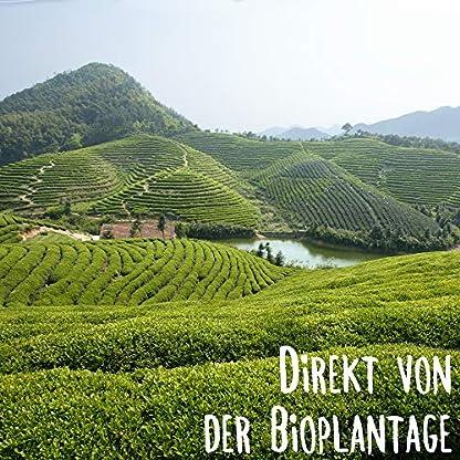 Grner-Tee-Bio-Sencha-I-100-Tassen-Grntee-I-100-Gramm-Grner-Tee-Bio-I-Organic-Green-Tea-by-MY-SUPERTEA