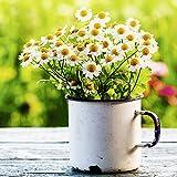 Artland Qualitätsbilder I Wandtattoo Wandsticker Wandaufkleber 40 x 40 cm Blumen Gänseblümchen Foto Grün B6VG Schöner Frühlingsgarten mit Gänseblümchen