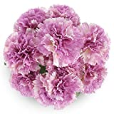 SOLEDI Artificial Slik Carnations 10 Heads Lifelike Fake Flowers Bouquet DIY For Wedding Home Bar Decor (Purple)