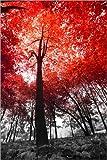 Posterlounge Forex-Platte 80 x 120 cm: Blutbuche von Editors Choice