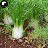 PLAT FIRM KEIM SEEDS: 200pcs: Kaufen Cumin Seeds Pflanze Gewürze Gemüse Fenchel Hui Xiang
