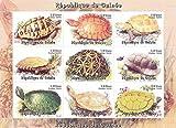 Sammelbare Briefmarken - Artwork von Schildkröten Landschildkröten und Sumpfschildkröten MNH Sonderblock / Guinea / 1998