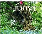 Uralte Bäume: Original Stürtz-Kalender 2020 - Großformat-Kalender 60 x 48 cm -