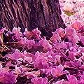 Fototapete (FOB0236) von decomonkey - TapetenShop