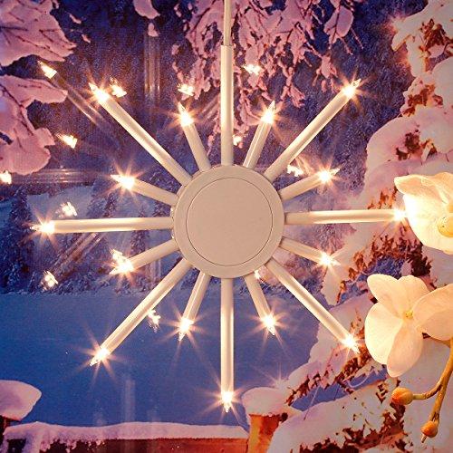 Gärtner Pötschke Leuchtstern Winterpracht