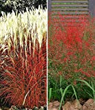 BALDUR-Garten Ziergras-Kollektion,4 Pflanzen