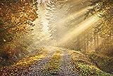 Fototapete Waldweg im Herbst mit Sonnenschein - Größe 315 x 232 cm, 4-teilig