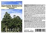 Seedeo® Japanische Sicheltanne (Cryptomeria japonica) 100 Samen