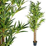 PLANTASIA® Bambus-Strauch
