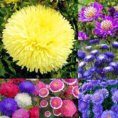 inkeme giardino - 100 pezzi semi di calendula semi di fiori di calendula semi di fiori estivi semi di semi di fiori di mare per i letti/prati da giardino