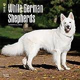 White German Shepherds - Weiße Schäferhunde 2018-18-Monatskalender mit freier DogDays-App: Original BrownTrout-Kalender [Mehrsprachig] [Kalender] (Wall-Kalender)