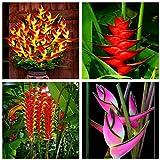 2017 New Indoor Plants Flowers Strelitzia Reginae Seeds - Best Reviews Guide