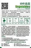 3 Packs 24 de las semillas vegetales Florencia hinojo D038