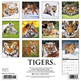 Image de Tigers 2017 Calendar
