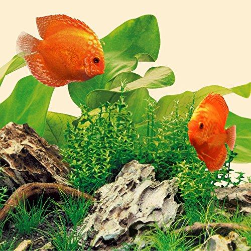 JUWEL Aquarium 86830
