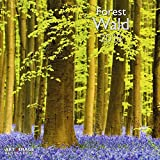 Wald 2018 - Wandkalender, Naturkalender, Landschaftskalender 2018 - 30 x 30 cm - Art&Image