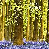Wald 2018 - Wandkalender, Naturkalender, Landschaftskalender 2018 - 30 x 30 cm