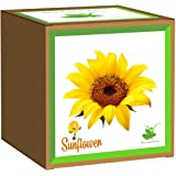 Sow and Grow Seed Starter Grow Kit of Sunflower || DIY Easy Grow it Yourself Gardening Kit for Home and Garden || A Complete