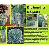 15x Dichondra Repens Planta Semillas Jardín Semillas Nueva Variedad Fresco Jardín #75