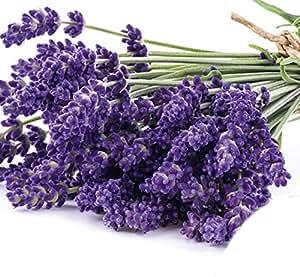 Lavendel Samen