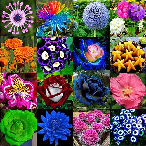 Beautiful Variete De Fleurs De Jardin Pictures - House ...