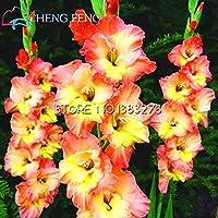 30 semi / bag perenne Gladiolus fiore raro all'aperto giglio di spada Semi Planter Lily Bulbi bella per piante Casa giardino Osservare