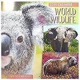 Calendrier mural 2019 carré (World Wildlife) - Animaux sauvages, en voie de disparition, félins, Lions, Tigres, Ours, Dauphins, Oiseaux- Accompagné de données factuelles (français non garanti)