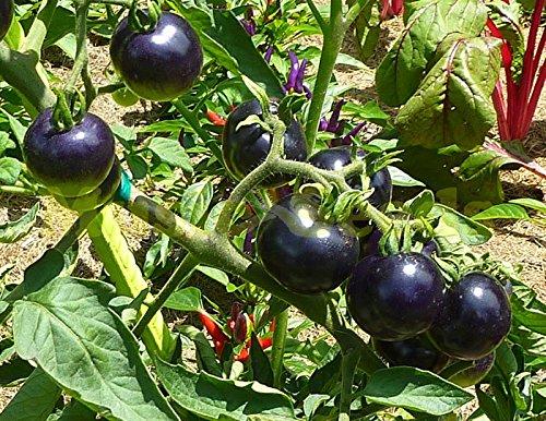 Graines de tomates vertes Semences Potagères de 1bag = Rare noir mini-graines de Tomatto bonsaï Décoration Maison & Jardin