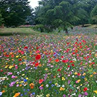 Buy 2 Packets GET 2 Packets Free 100% UK Wild Flower Seed Mix Annual Meadow Plants Attracts Bees & Butterfly (10g) Wildflower Seeds, IF You Buy 1 Packet You Will Receive 1 Packet