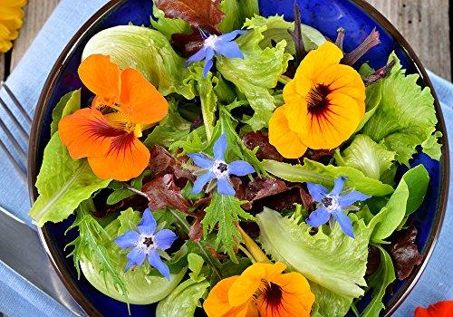 Essbare Kräuter und Blumen Mix Samen - -