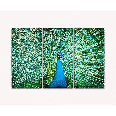 DEINEBILDER24, de - quadro 3 pezzi pavone ritratto su tela e telaio. Alta qualità, prodotto a mano in Germania!, Tela, blau gelb weiß grün rot orange braun schwarz rosa, 80 x