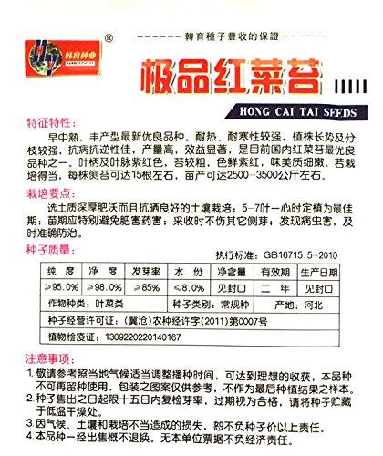 1 Sac graines de légumes chinois, la maturité précoce Kale chinoise graines de boulon rouge * 10g 500+ pièces par sac hongcaitai