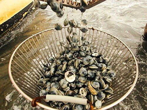 Chesapeake Bay: Of Clams and Oysters -