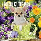 Teacup Chihuahuas 2018 - 18-Monatskalender mit freier DogDays-App: Original BrownTrout-Kalender [Mehrsprachig] [Kalender] (Wall-Kalender)