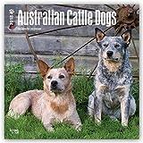Australian Cattle Dogs 2018 - Australische Cattle Dogs - 18-Monatskalender mit freier DogDays-App: Original BrownTrout-Kalender [Mehrsprachig] [Kalender] (Wall-Kalender)