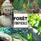 Forêt tropicale - Nature, Animaux, Oiseaux, Zen musique de relaxation profonde pour détente, Méditation, Spa, Yoga, Bien-être et Sommeil, Dormir bien