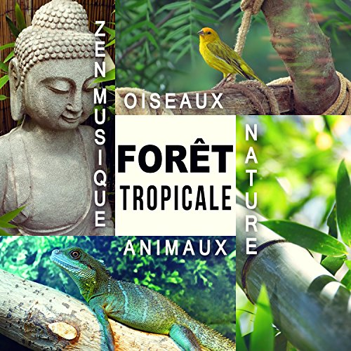 musique relaxation foret amazonienne