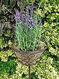 Blumenkorb aus Metall zum stecken - 100 cm - Gartenstecker Pflanzenkorb Metallkorb