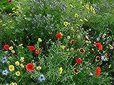 10 m² Blumenmischung Insektennektar mit Saathelfer sonniger halbschattiger Standort Blumensamen Bienenmischung Naturgarten