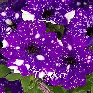 50pcs petunia seeds petunia u0027night skyu0027 flower seeds home garden potted