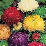 PinkdosePinkdose Blumensamen: Aster-Ducess Formula Mixed Gartenhecke (10 Packete) Gartenpflanzensamen von