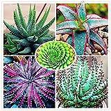 Pinkdose 100pcs / bag Grande vendita Aloe vera Flores, ornamentale, commestibili, medicinaland bellezza estetica piante bonsai per la casa e fai da te giardino: ! MIX