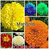 #8: Rare Mixed Marigold Seeds Yellow Orange White Blue Green Red 50 seeds