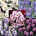 Staudengarten - 35 pflanzen von Meingartenshop - Du und dein Garten