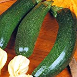 Courgette Diamant - 4 sacs de graines