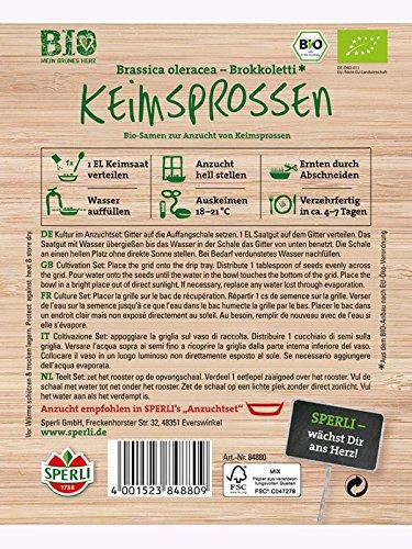 Keimsprossen Brokkoli Brassica oleracea