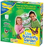 Insect Lore - 8010 FR - Elevage Farfalle - Verde