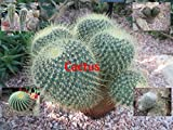 Cactus found on the driest places on Earth called The Desert.